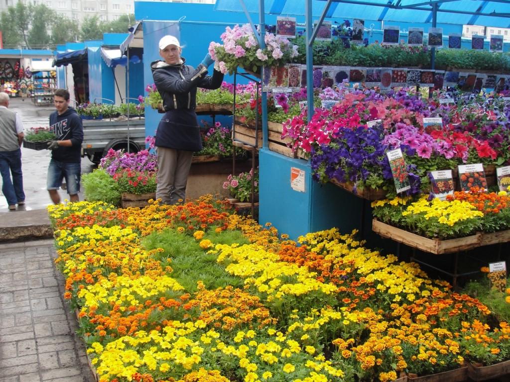 Растения и семена купить недорого в ОБИ, цены на растения